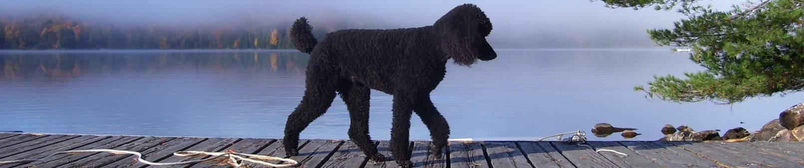 NYOC Dog Training